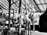 """""""Chicken Dance"""" Sicily December 2012"""